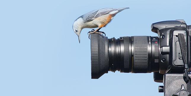 Bird peering into a camera lens