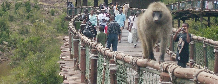 Top attractions in Nairobi