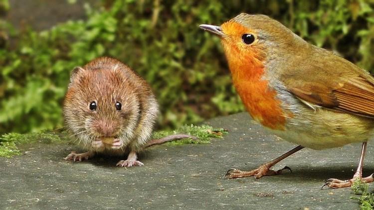 miceandbirds