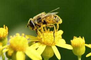 Fiesta del polen!!