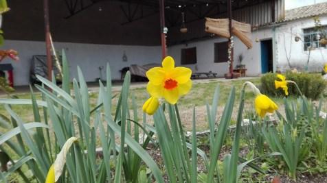 El jardin de la charca 24