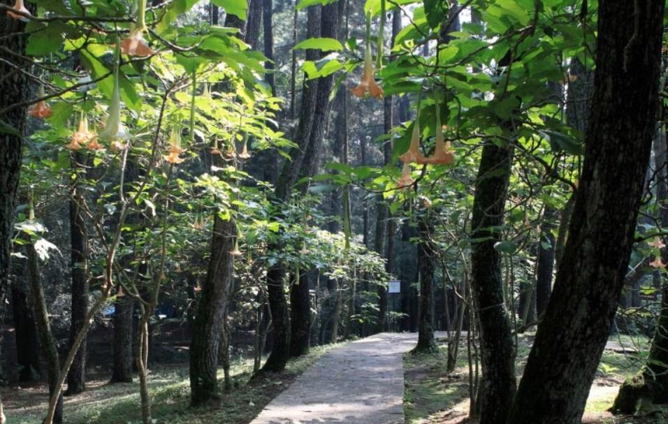 Tempat Wisata Di Bandung Taman Hutan Raya Djuanda