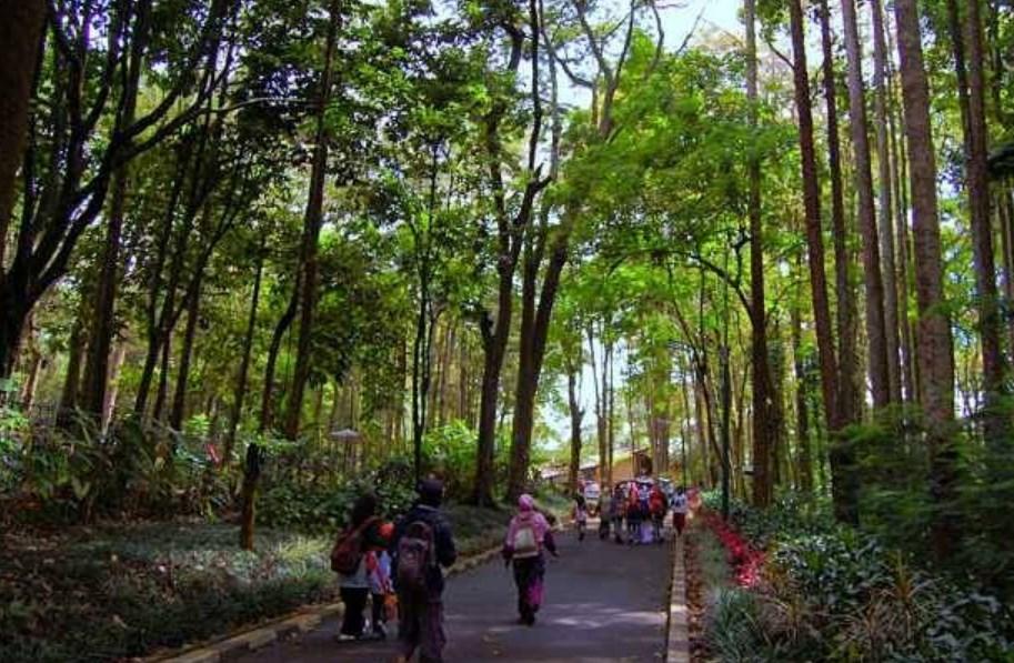 Harga Tiket Masuk Taman Hutan Raya Djuanda Bandung