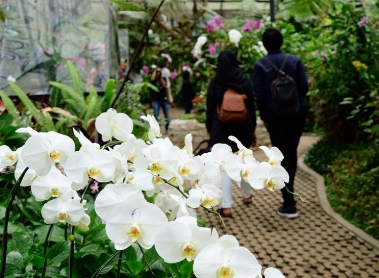 Berbagai Jenis Tanaman Anggrek Di Orchid Forest