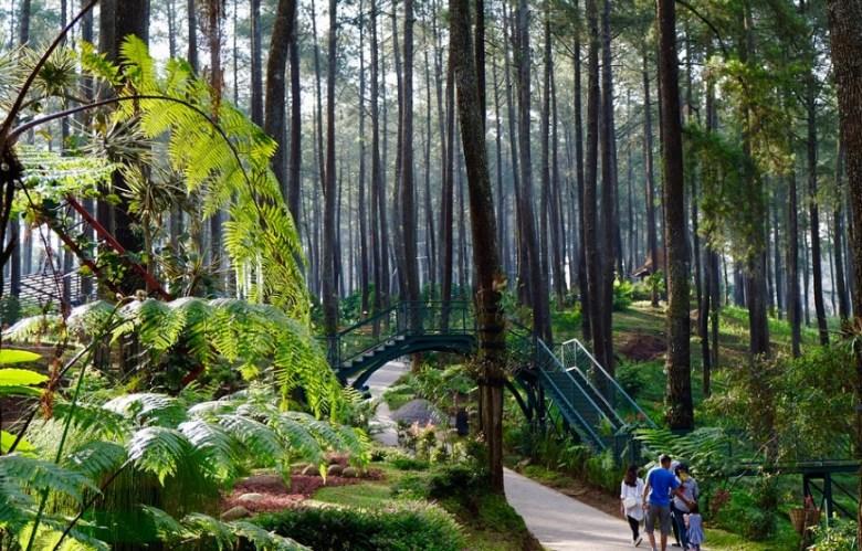 Down Hill Track Khas Orchid Lembang