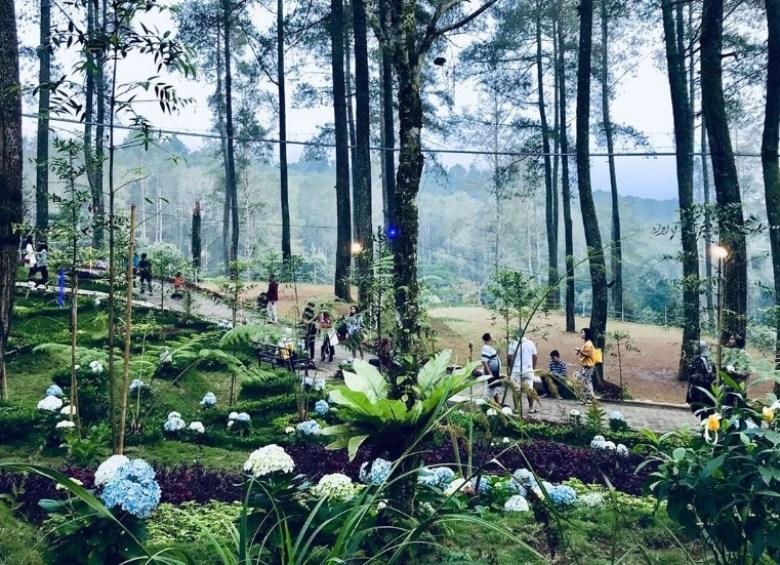 Fasilitas Wisata Di Orchid Forest Lembang Bandung