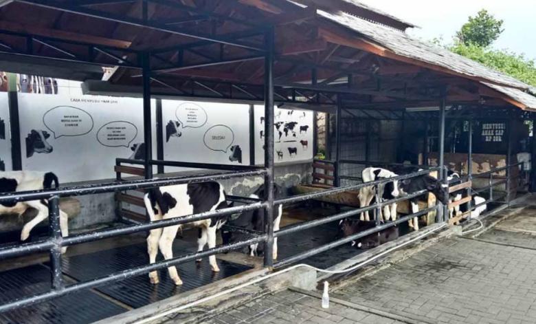 Kebun Binatang Mini Ala Farmhouse Lembang