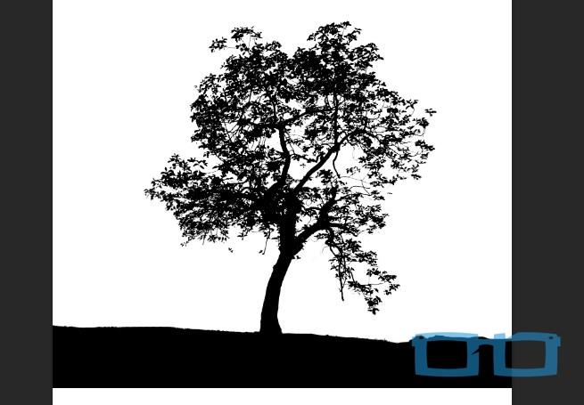 Hasil Hitam Putih Objek Foto Pohon