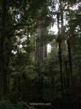 Bosque de Mangamuka