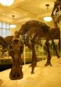 Esqueletos de dinosaurio