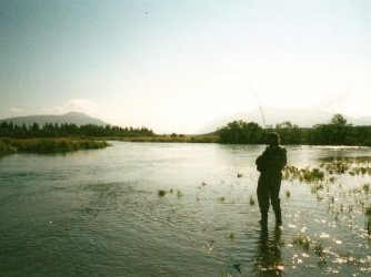 A man fly fishing in the Brooks River, Alaska with a Rainbow trout on his line