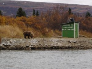 A bear standing next to a shed that says Welcome to Kulik Lodge