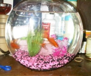 Constance's fish and fish bowl