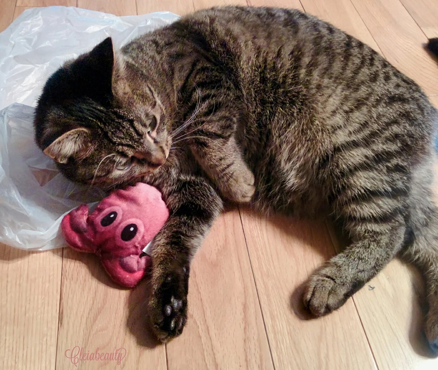 January 2017 Meowbox - Quantum Playing with Octopus Toy