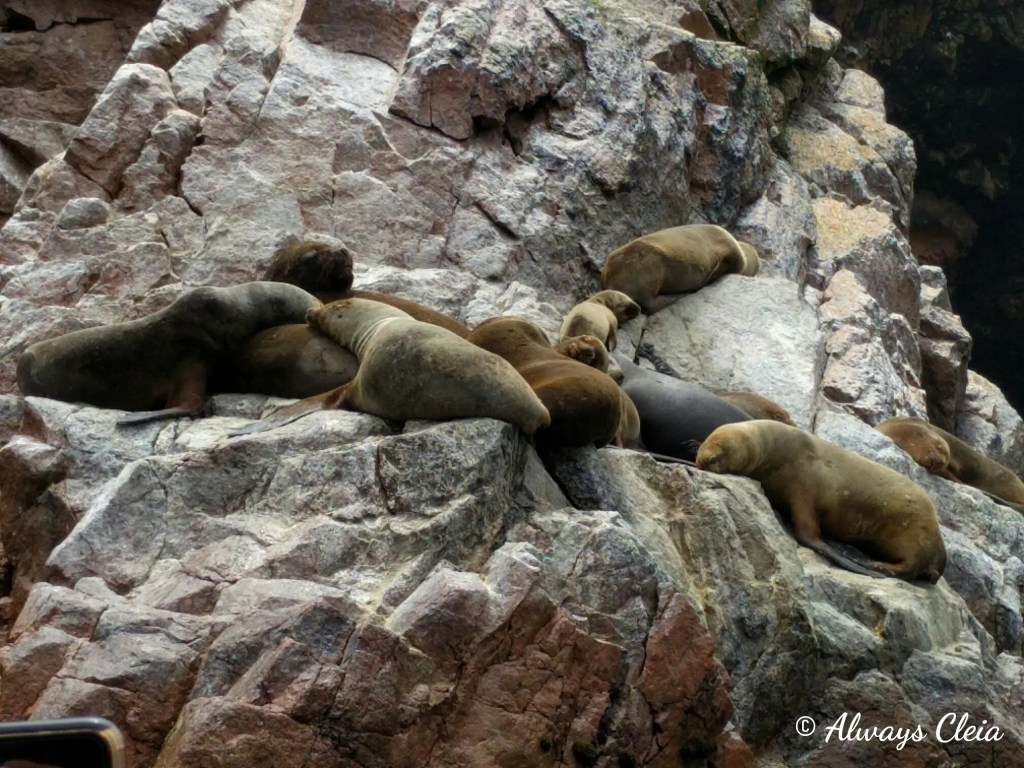 Ballestas Islands Sea Lions