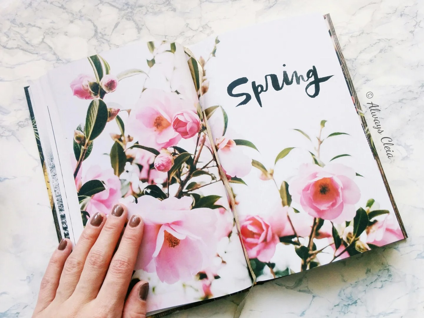 The 52 Lists Project Spring