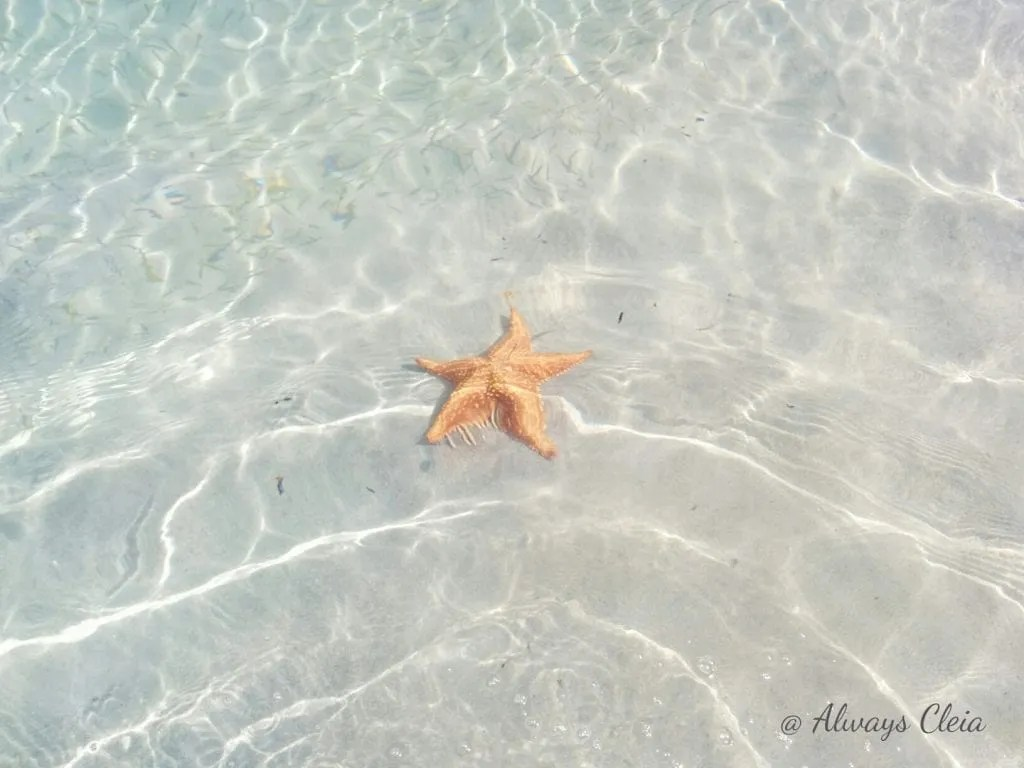 Starfish Beach Panama