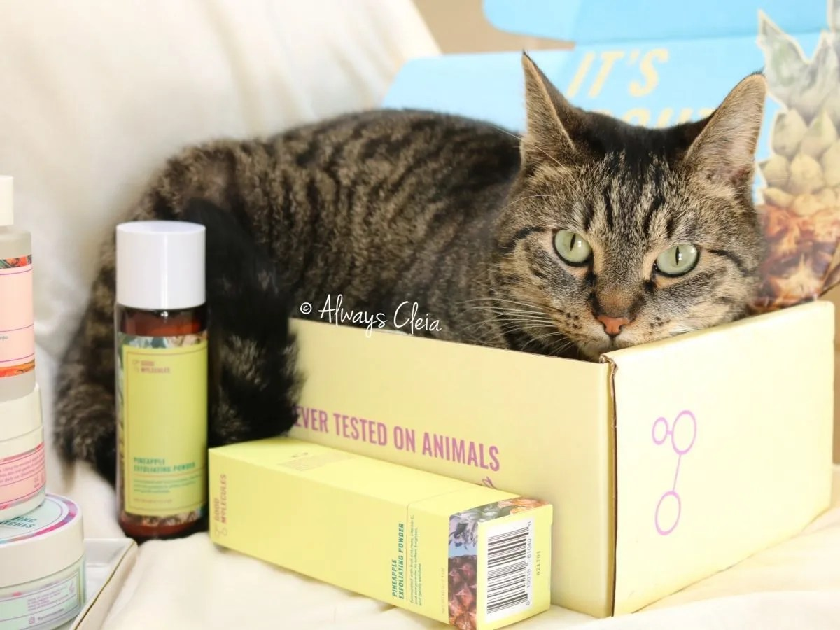 Good Molecules Pineapple Exfolating Powder - Cat in shipping box