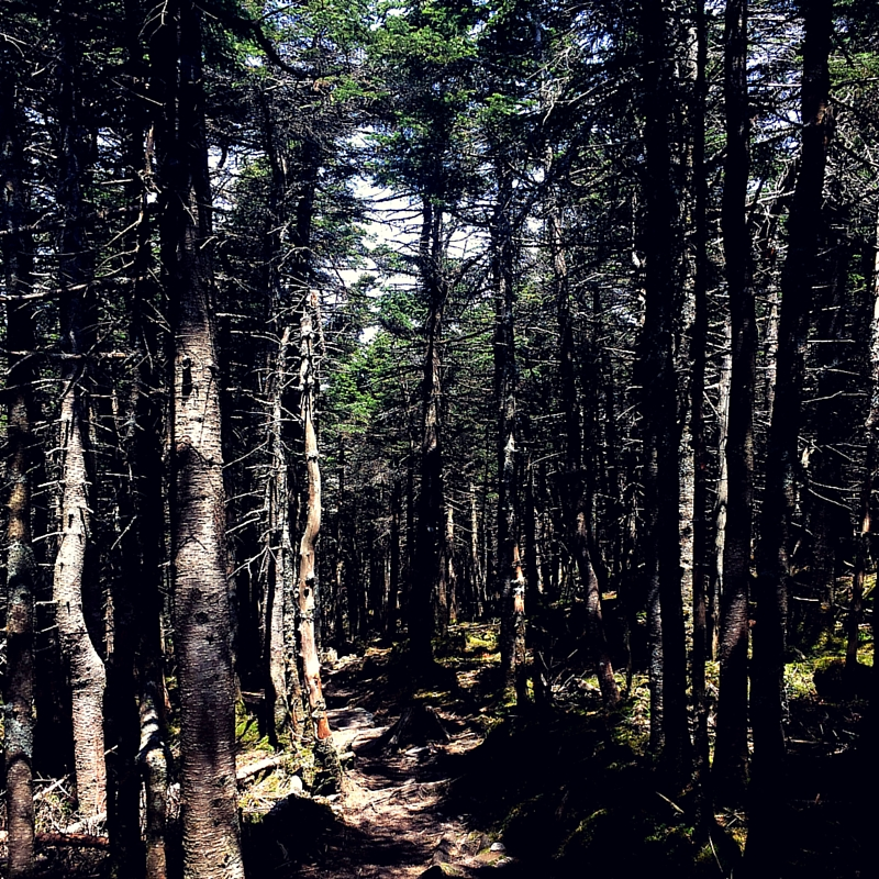 hiking mt. moosilauke trails