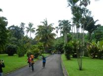 Bogor Botanical Gardens Kebun Raya21