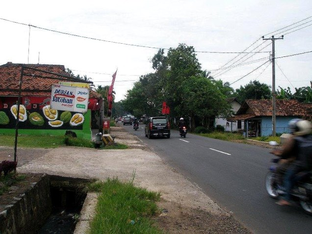durian indonesia