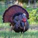 Photo Credit: Jim Cummings - 560606673. getttyimages.com. INTJ Music Playlist #17 Thanksgiving Survival