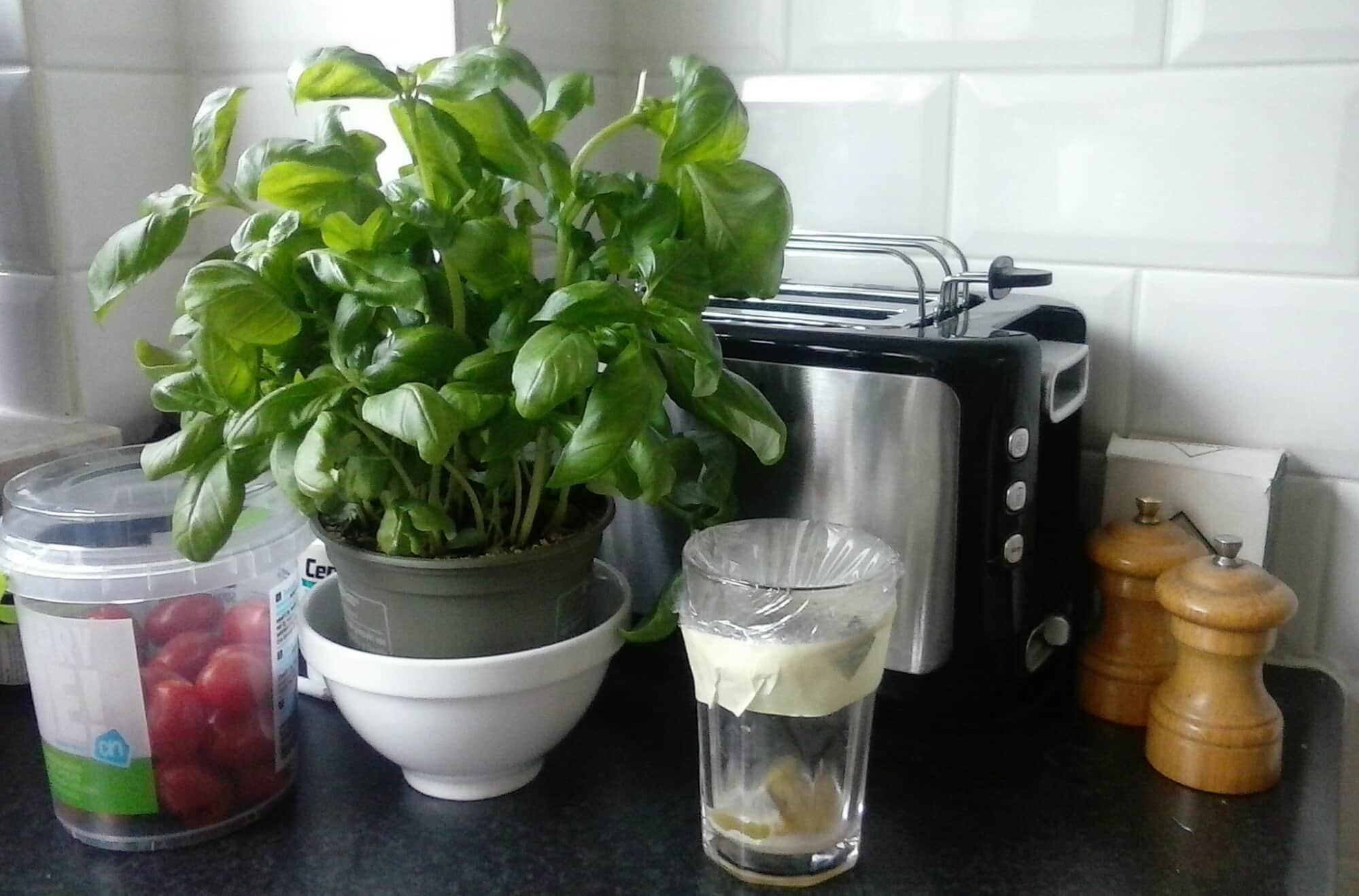 Tip zo kom je van die vervelende fruitvliegjes af for Fruitvliegjes in keuken