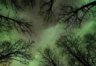 Işık Ormanı