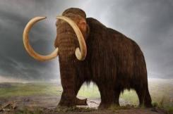 Artık nesli tükenmiş olan 'Yünlü mamut' isimli mamut türünün canlıları Mısır Piramitleri inşa edilirken varlardı.