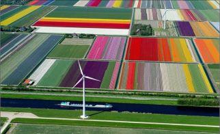 HOLLANDA – Çiçek bahçelerinin kuşbakışı görünümü