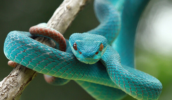 Snake Dream Meaning   The Meaning of Snakes in Your Dream