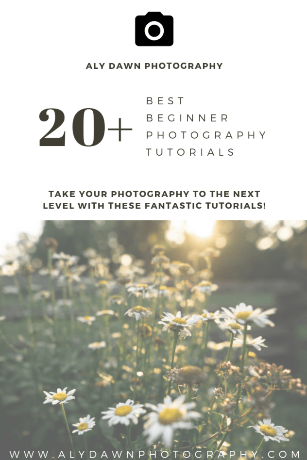 The Best Beginner Photography Tutorials - Improve Your Photography Now! | Aly Dawn Photography