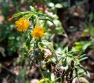 0687_yellow_flowers