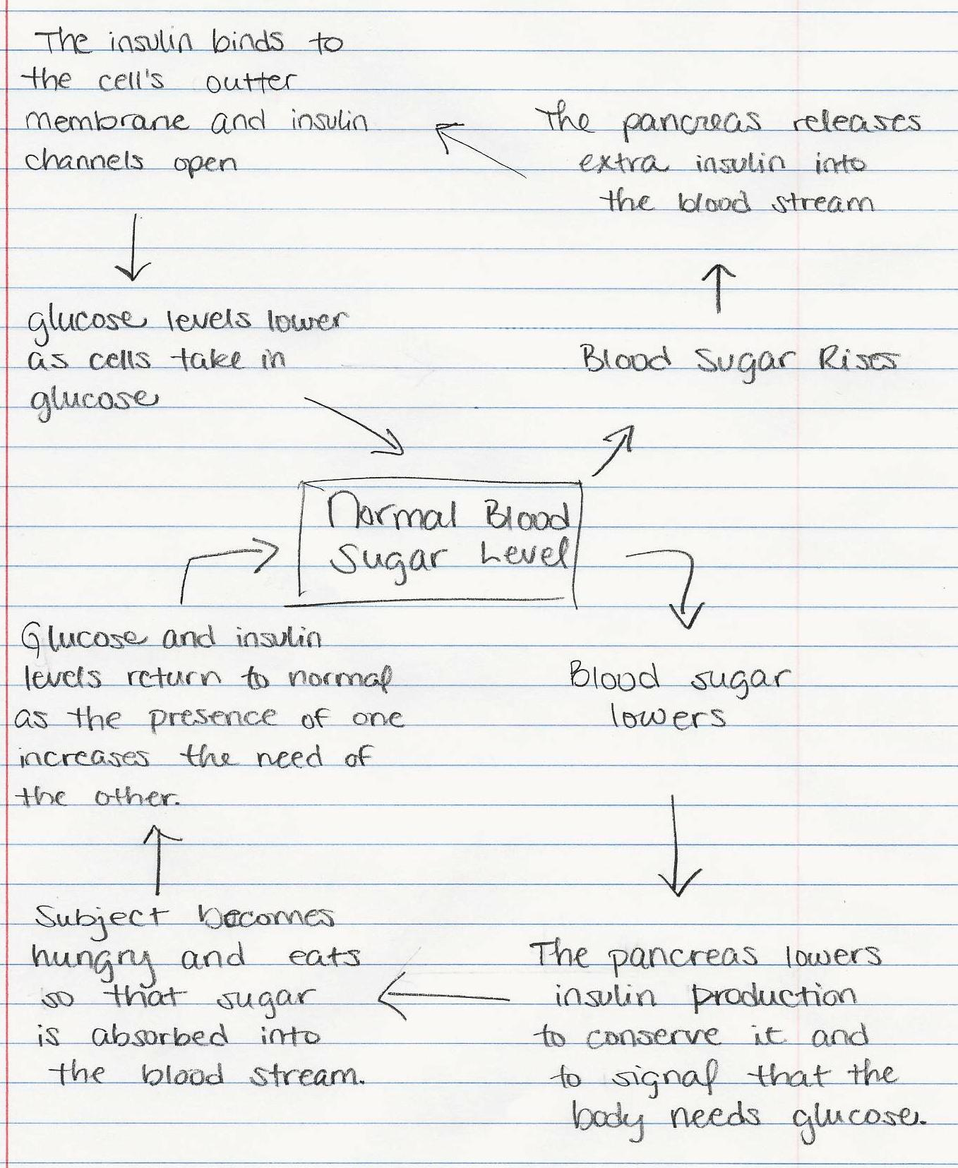 Blood Glucose Levels Concept Map Answers