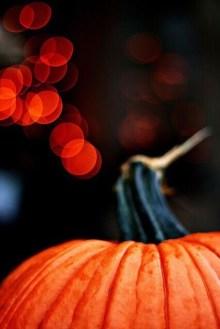 Up close to Pumpkin