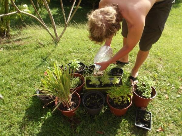 Jardin Creole in Martinique