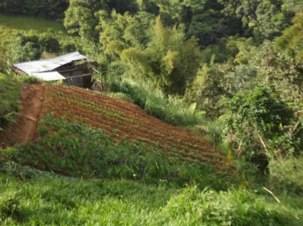 Jardin creole, Gros Morne, Sainte Marie