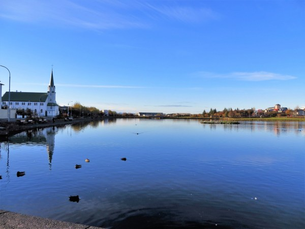 tjornin lake, feed birds in reykjavik, things to do on a layover in iceland, short iceland layover