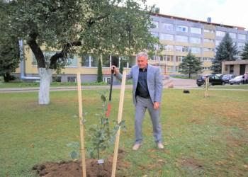 Šalia daktaro S. Kudirkos sodintų obelų ligoninės kieme augs nauji sodinukai, juos sodino ir Alytaus ligoninės vadovas Artūras Vasiliauskas