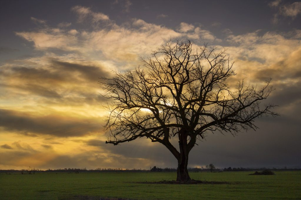 Tree in sunset representing stability, spaciousness and warmth