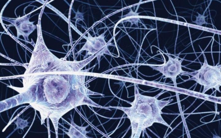 Neurons_Wellcome Images_UW