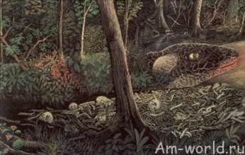 Исполинский червь минхочао