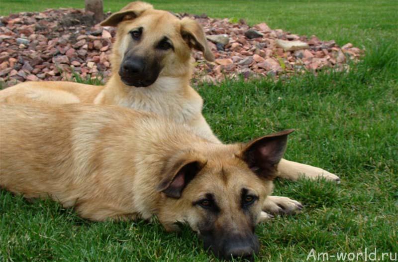 Неизвестные породы собак