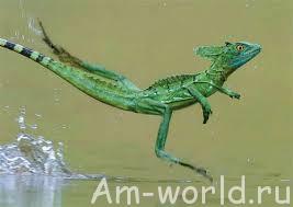 Наследие динозавров в наши дни