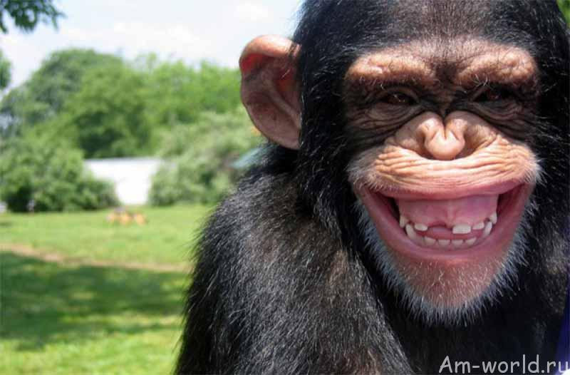 Смеяться животные могут не хуже нас