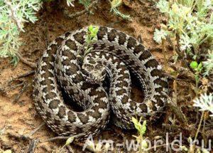 Не змея погубила Вещего Олега