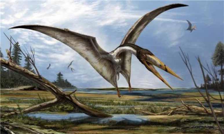 Картинки по запросу Птерозавры фото