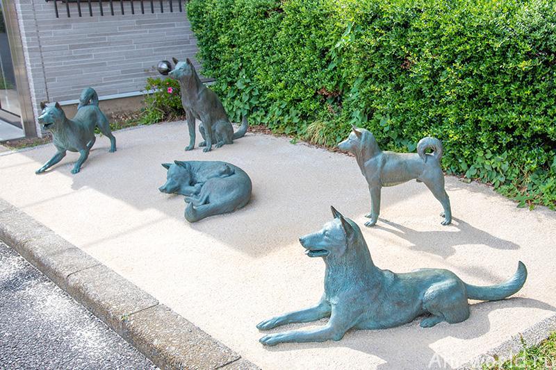 Сёгун на защите собак