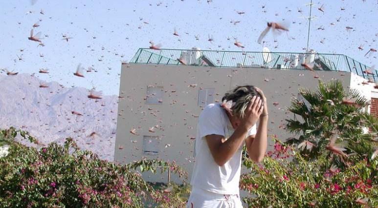 Саранча - насекомое уничтожающее города