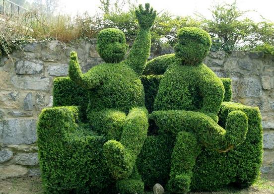 Самшит - вечнозеленый долгожитель 2